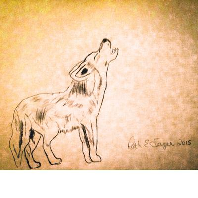 400x400 Coyote