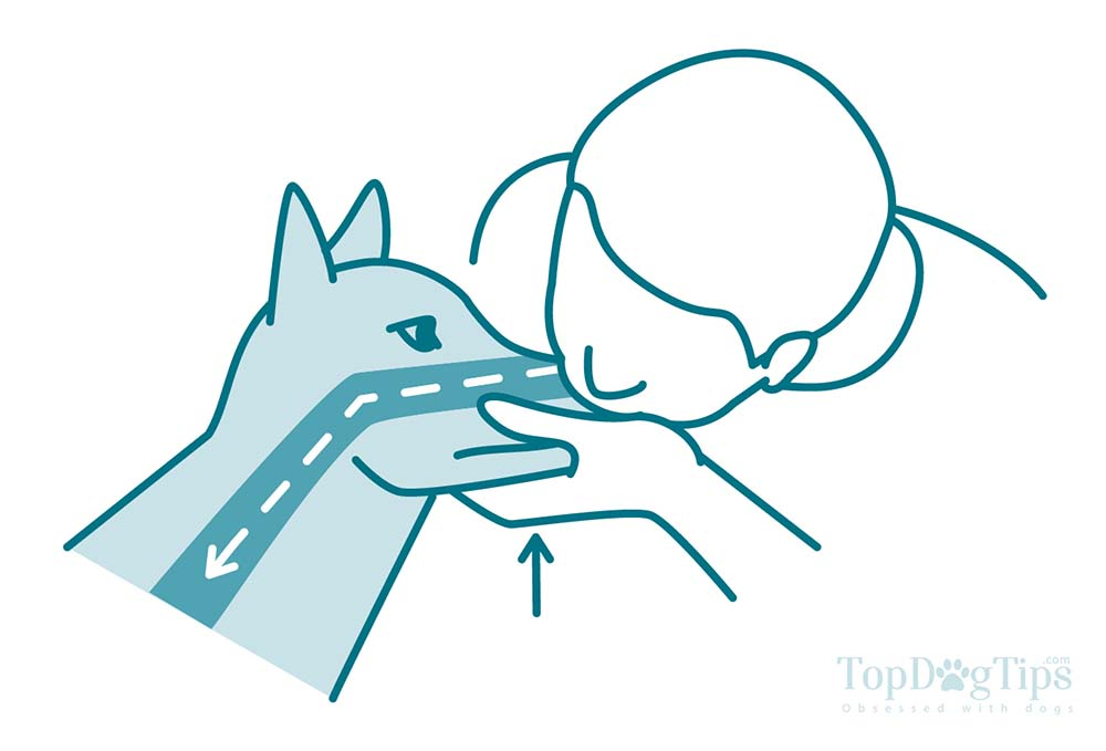 1000x679 How To Do Cpr On A Dog The Full Guide For Beginners