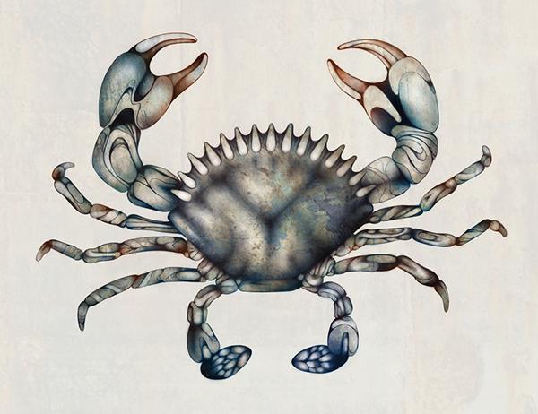 600x462 Crab Illustration On Behance