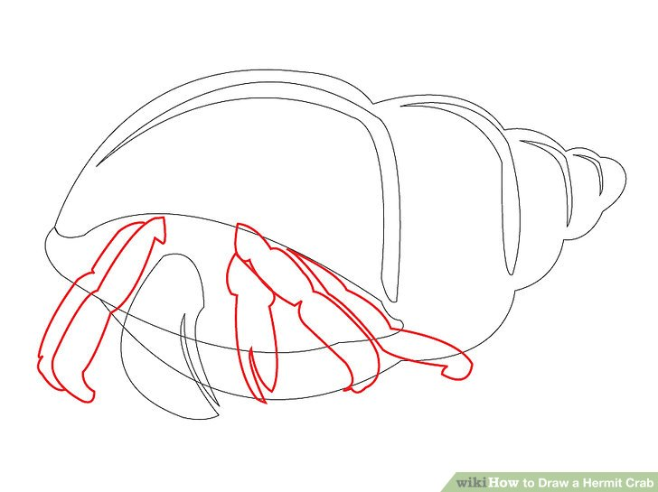 728x545 How To Draw A Hermit Crab 8 Steps (With Pictures)