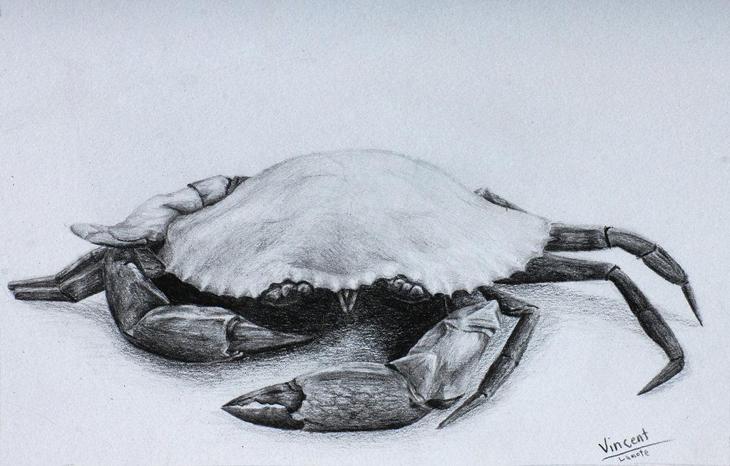 1024x654 Mud Crab Drawing By Firedragon22