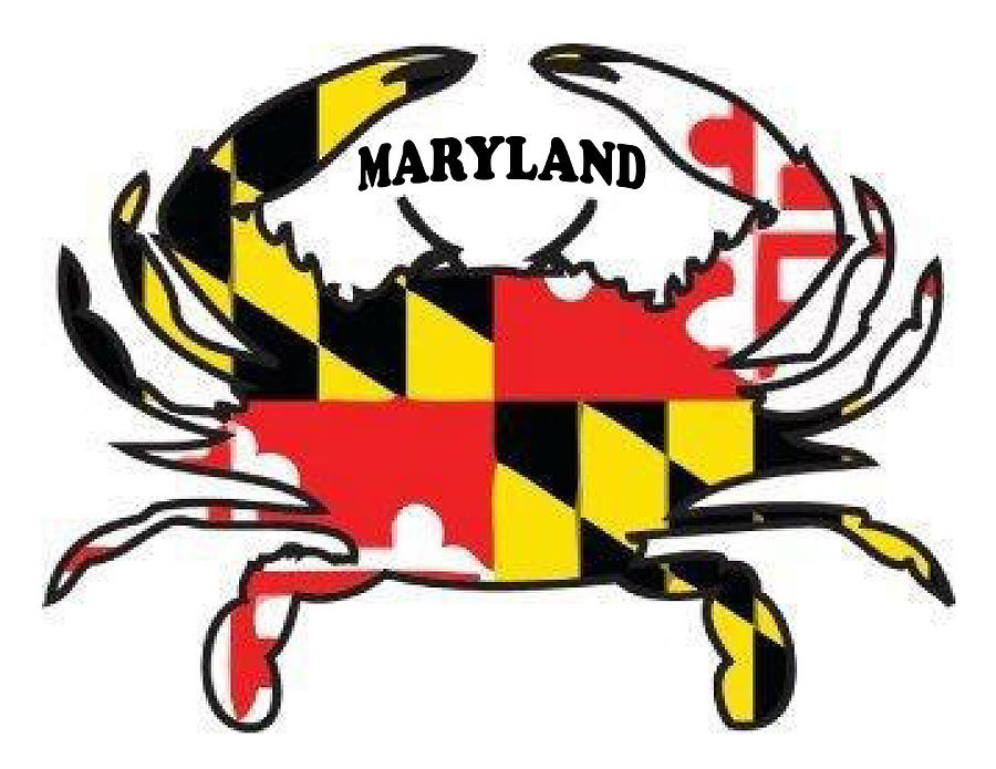 900x695 Maryland Crab Drawing By Bern Hopkins