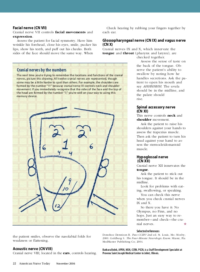 Cranial Nerve Drawing At Getdrawings Free For Personal Use