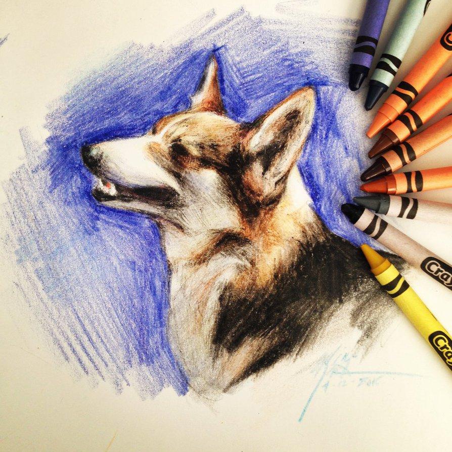 894x894 Corgi In Crayola Crayons By Capukat