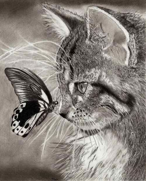 500x620 Crazy 3d Pencil Art Realistic Animal Drawings Realistic Animal