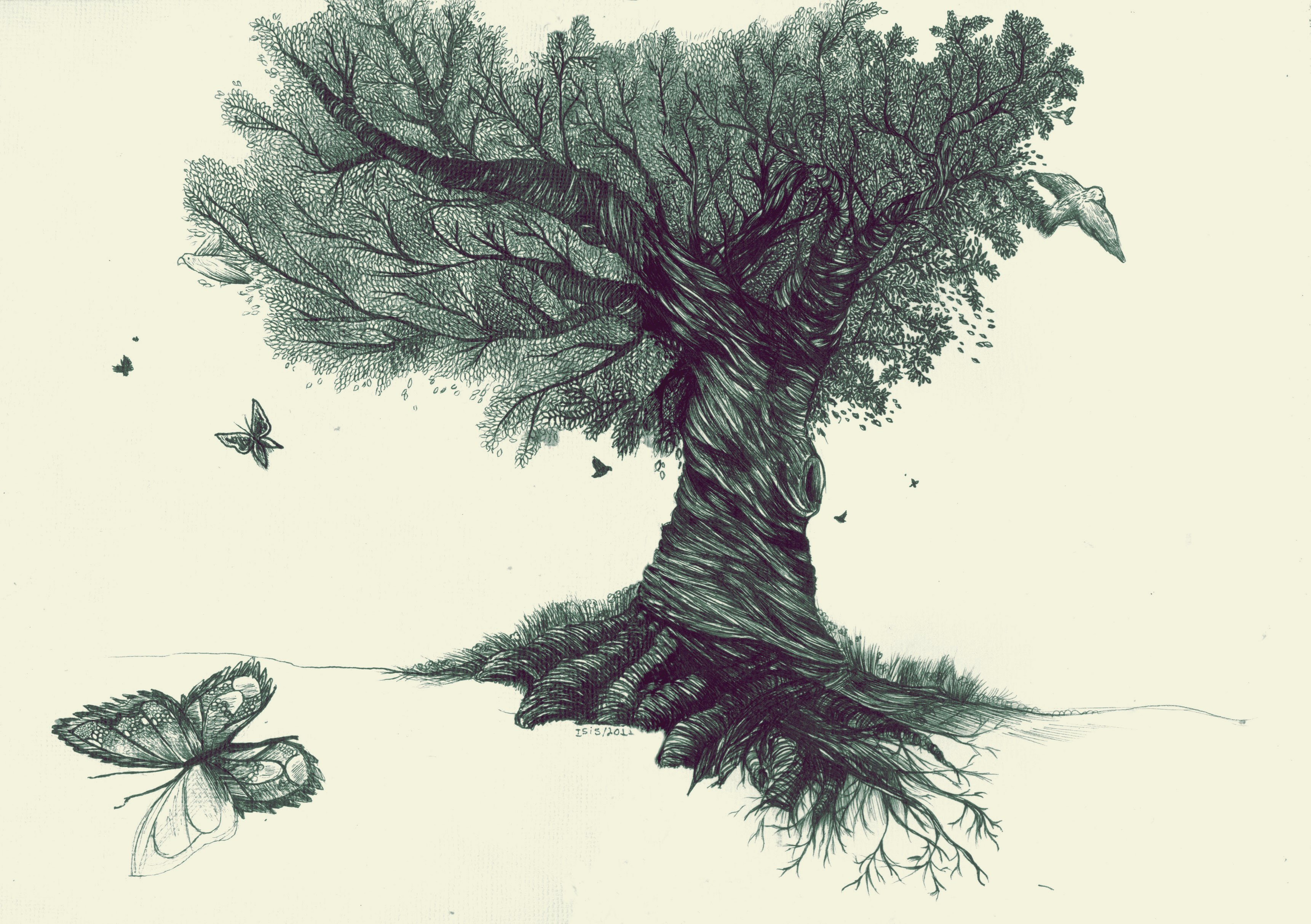 3443x2427 Beautiful Collection Of Tree Drawings, Art Ideas Design