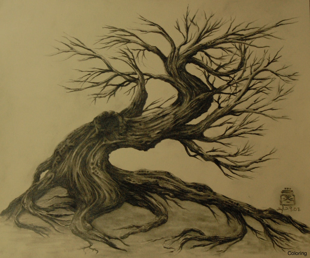 1024x852 Dry Tree Dead Tattoo How To Draw A Coloring Silhouette Or On White