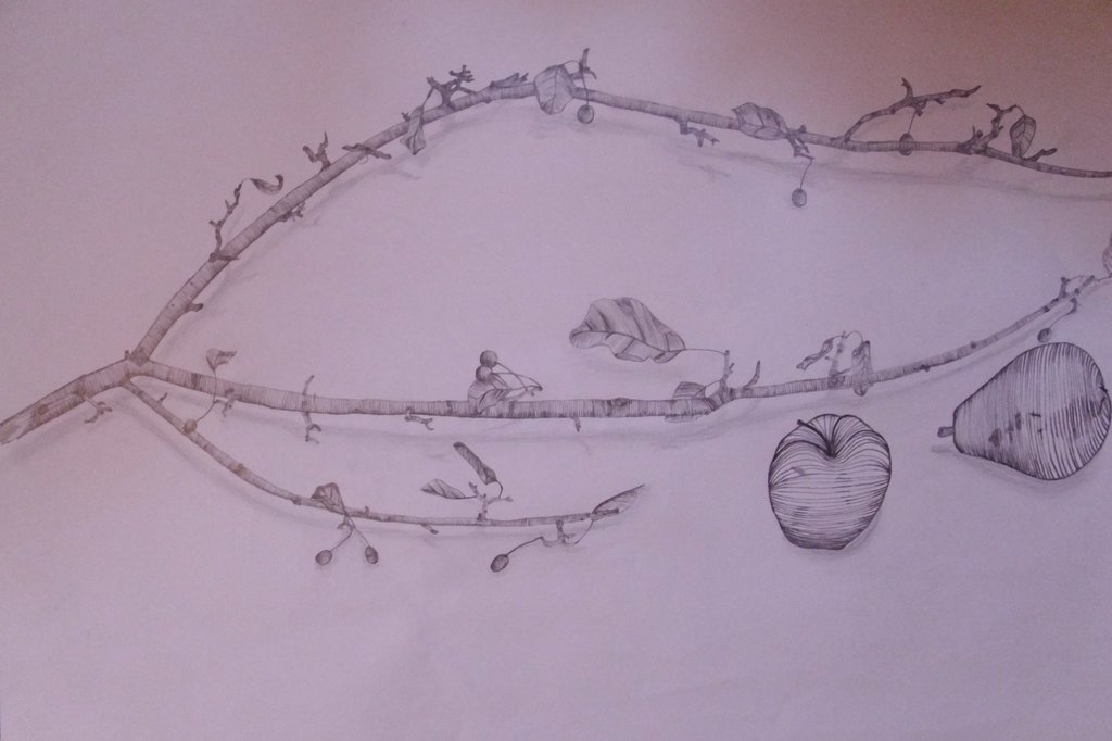 1024x682 Fruit And Tree Branch Cross Contour Still Life By Crear Con