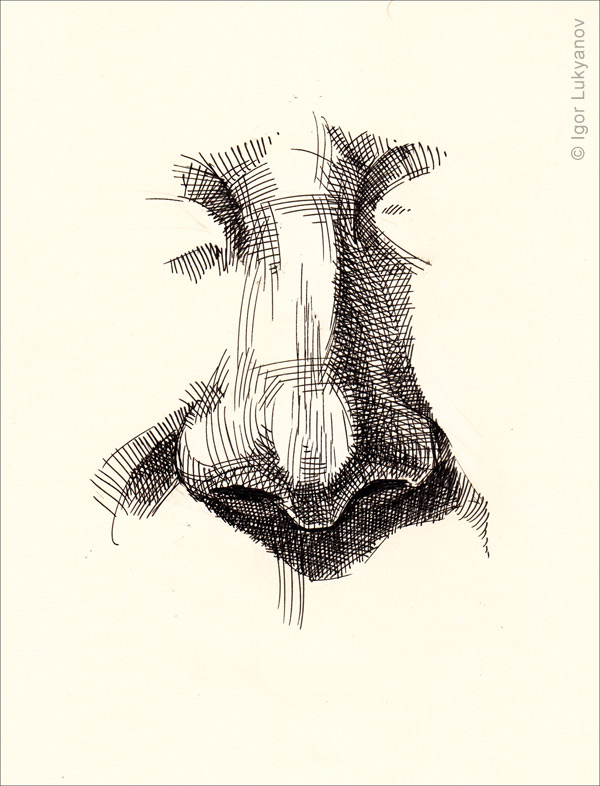 600x786 Drawing A Realistic Human Nose