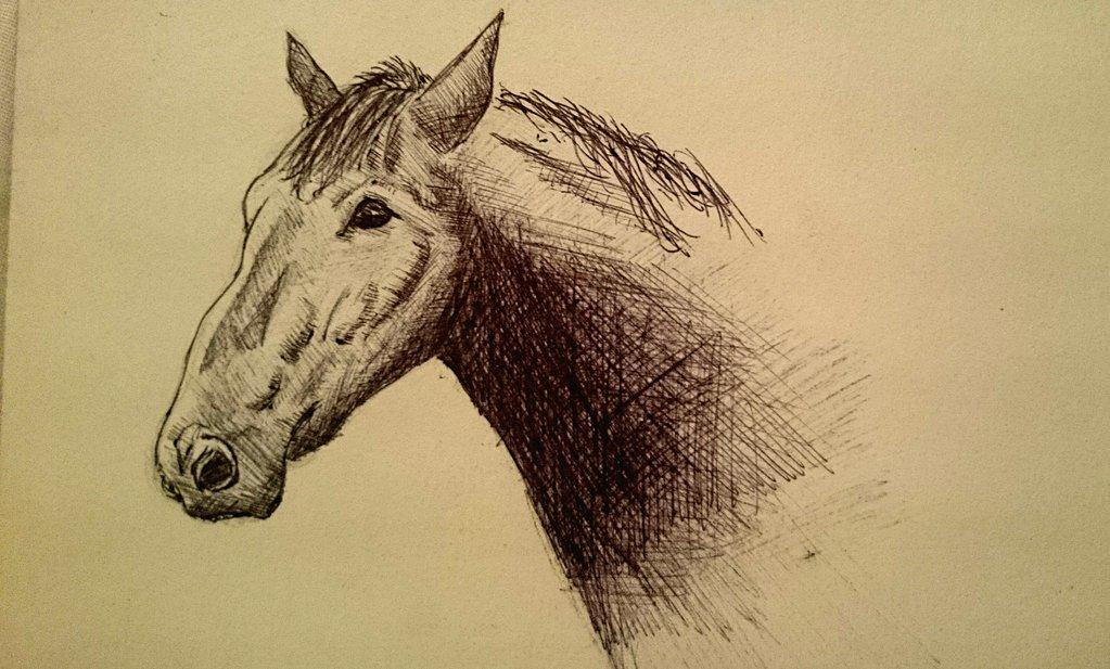 1023x617 Horse Head Pen Cross Hatching By Yatheihei