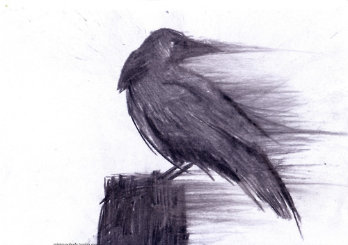 500x352 Art, Bird, Birds, Black, Black And White, Black