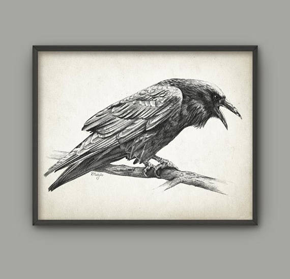 570x547 Raven Bird Art Print Raven Pencil Drawing Print Raven