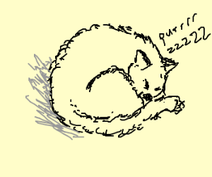 300x250 A Cat Curled Up In A Ball.