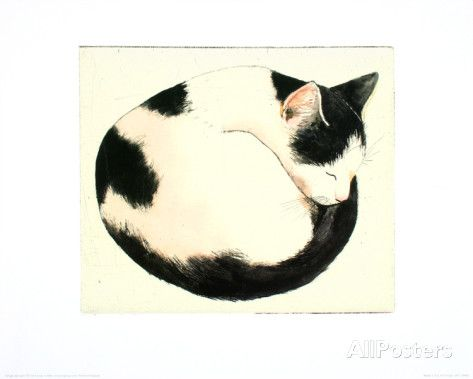 Curled Up Cat Drawing At Getdrawings Com Free For