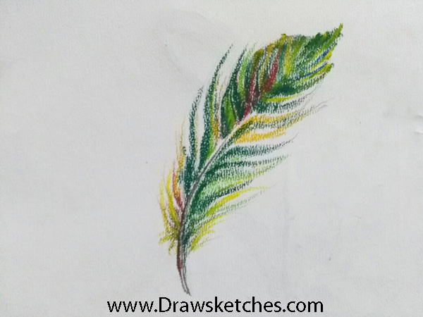 600x450 How To Draw A Featherin A Few Easy And Detailed Steps With Pictures