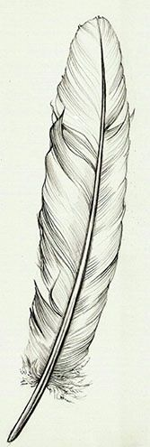 167x495 Learn How To Draw A Feather In This Lesson. Use Shape, Line,