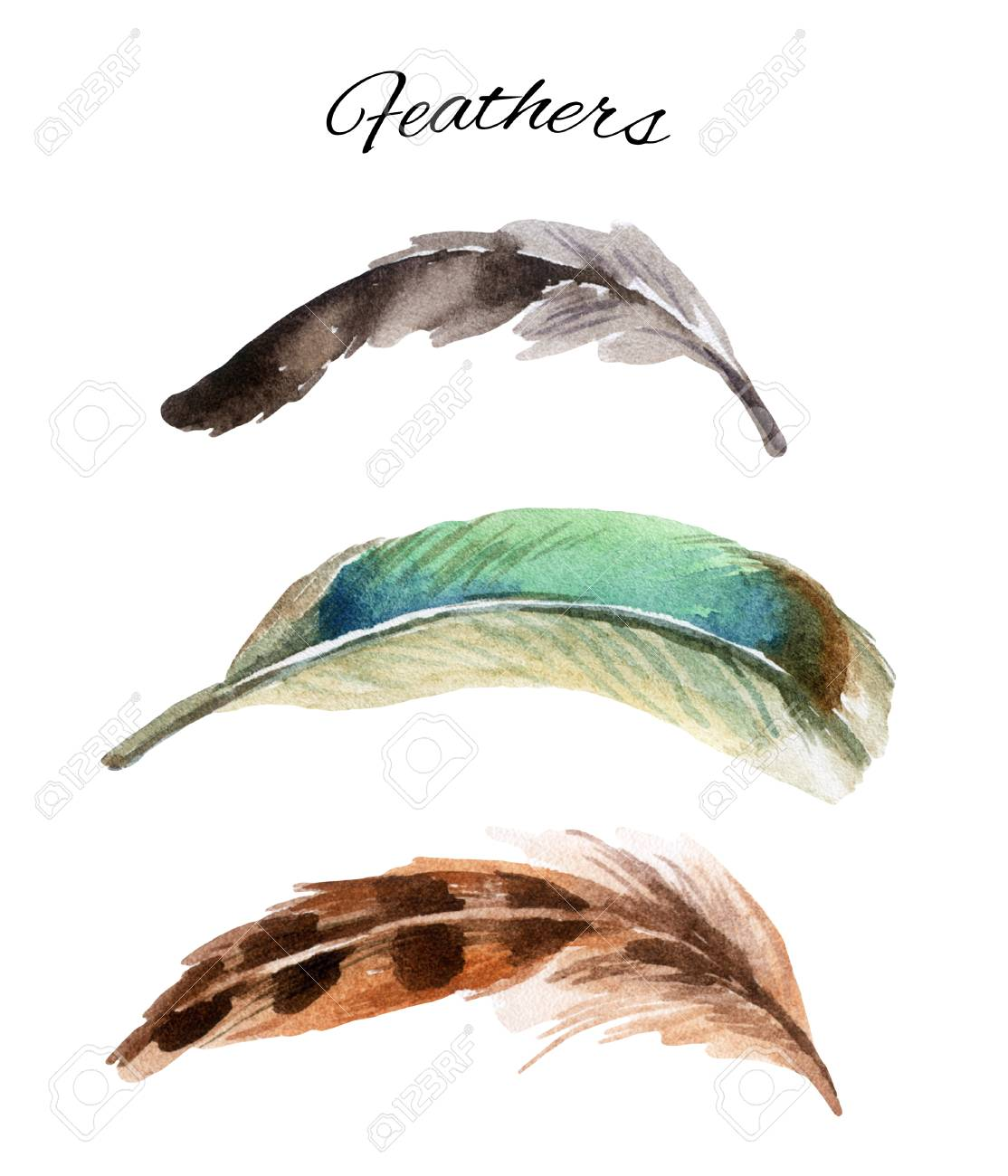 1114x1300 Watercolor Set Of Curved Feather, Hand Drawn Illustration Isolated