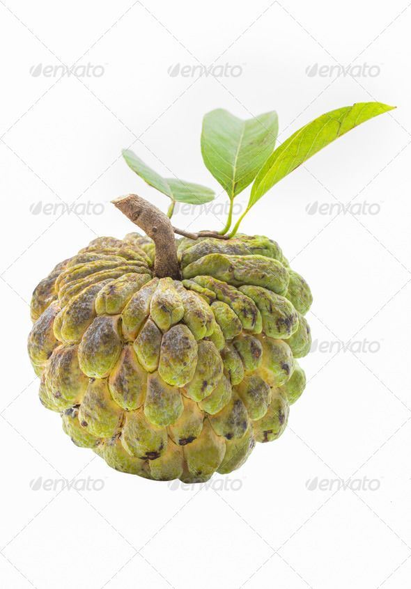 590x846 28 Best Sugar Apple Images On Tropical Fruits