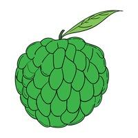 200x200 Food Foods Healthy Eating Fruit Fruits Custard Custards Pudding