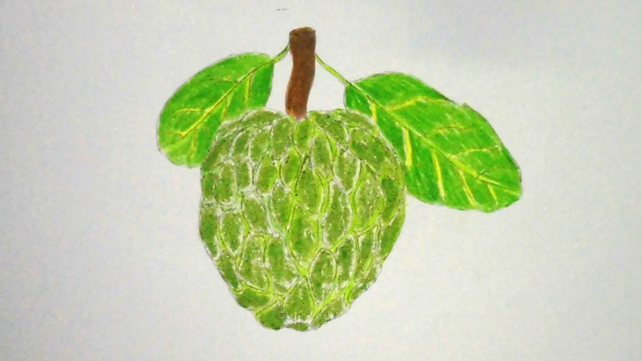 1280x720 How To Draw Custard Apple Step By Step Very Easy