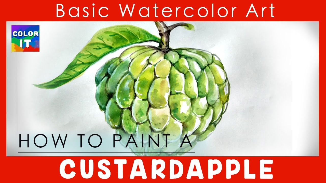 1280x720 Learn Easy Steps Draw Custard Apple Step By Step How