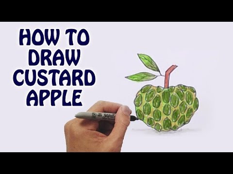 480x360 Learn How To Draw Custard Apple In Easy Steps Draw Fruits