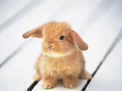 500x375 really really cute baby bunny