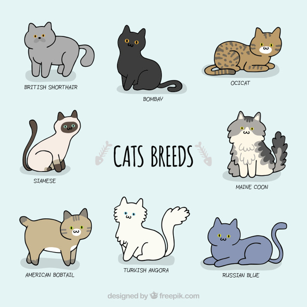 Sketchy Cat Names