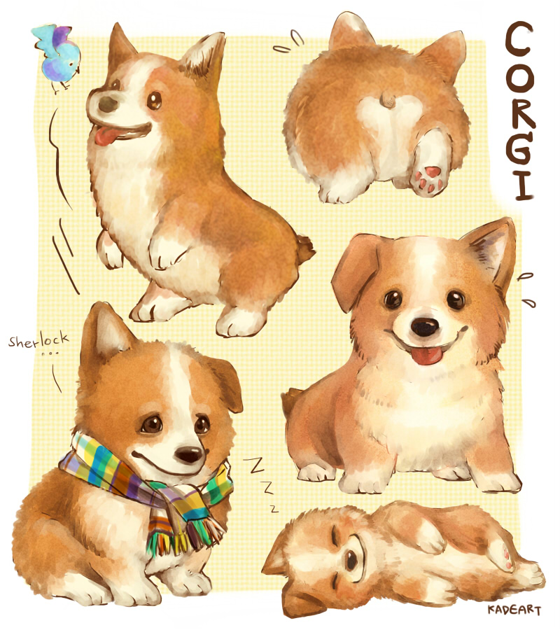 800x900 Another Cute Corgi Drawing. X Post From Tumblr
