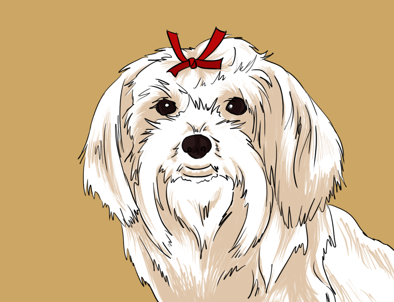 1283x983 How To Draw A Cute Maltese Dog Face 12 Steps (With Pictures)