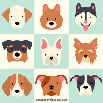 338x338 Lovely Dog Breeds 23 2147521430.jpg Pet