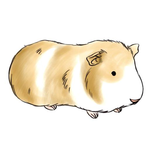 500x500 Guinea Pig Drawings How To Draw A Guinea Pig 6 Steps With Pictures