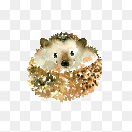 260x261 Hand Drawn Hedgehog Png Images Vectors And Psd Files Free