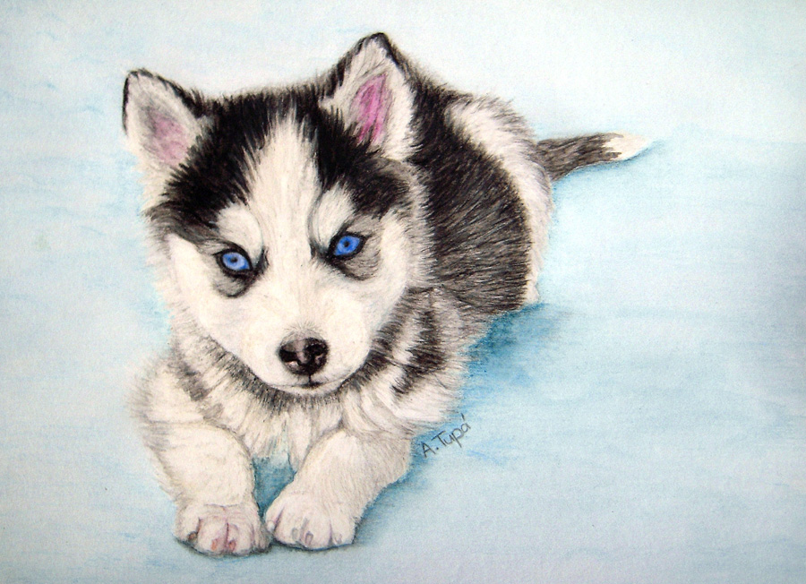 cute husky drawing at getdrawings com free for personal use cute
