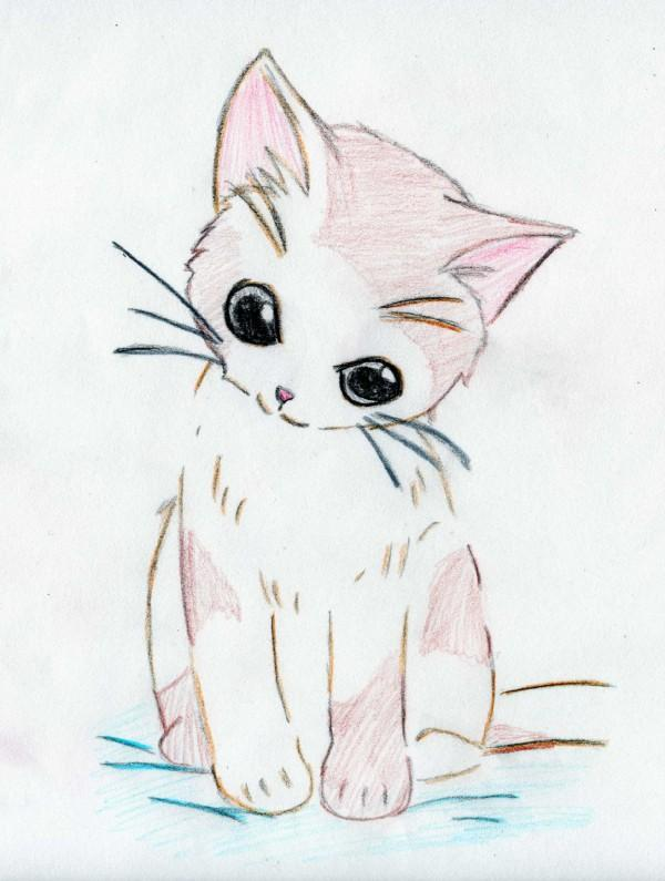 600x795 The Ultimate Cat Care Guide Anime, And Cat