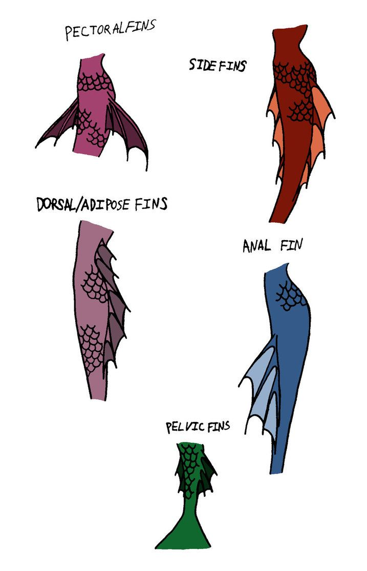 717x1115 Images For Gt How To Draw A Mermaid Tail Dolls