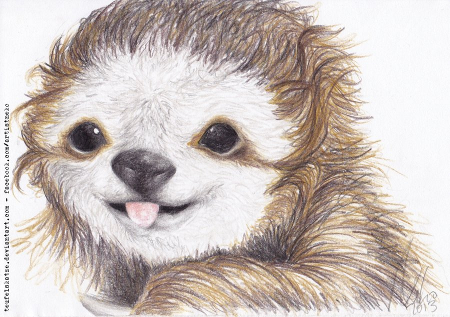 900x634 Cheeky Sloth By Teufelskatze