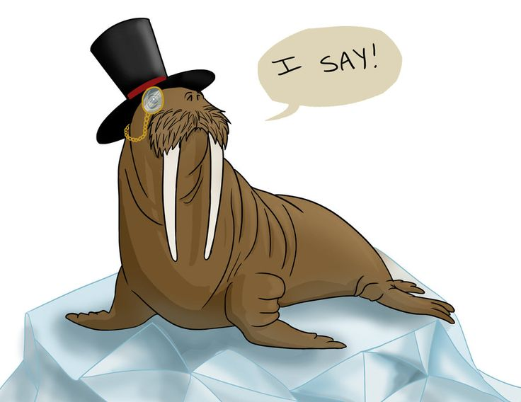Cute Walrus Drawing At Getdrawings Free For Personal Use Cute