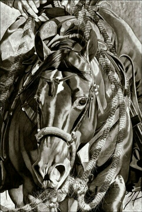 483x720 Aqha In Graphite Drawing Horses = Freedom Graphite