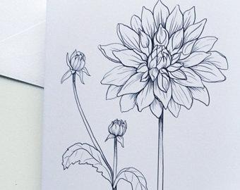 340x270 Antique Original Botanical Drawing Antique Botanic Drawing