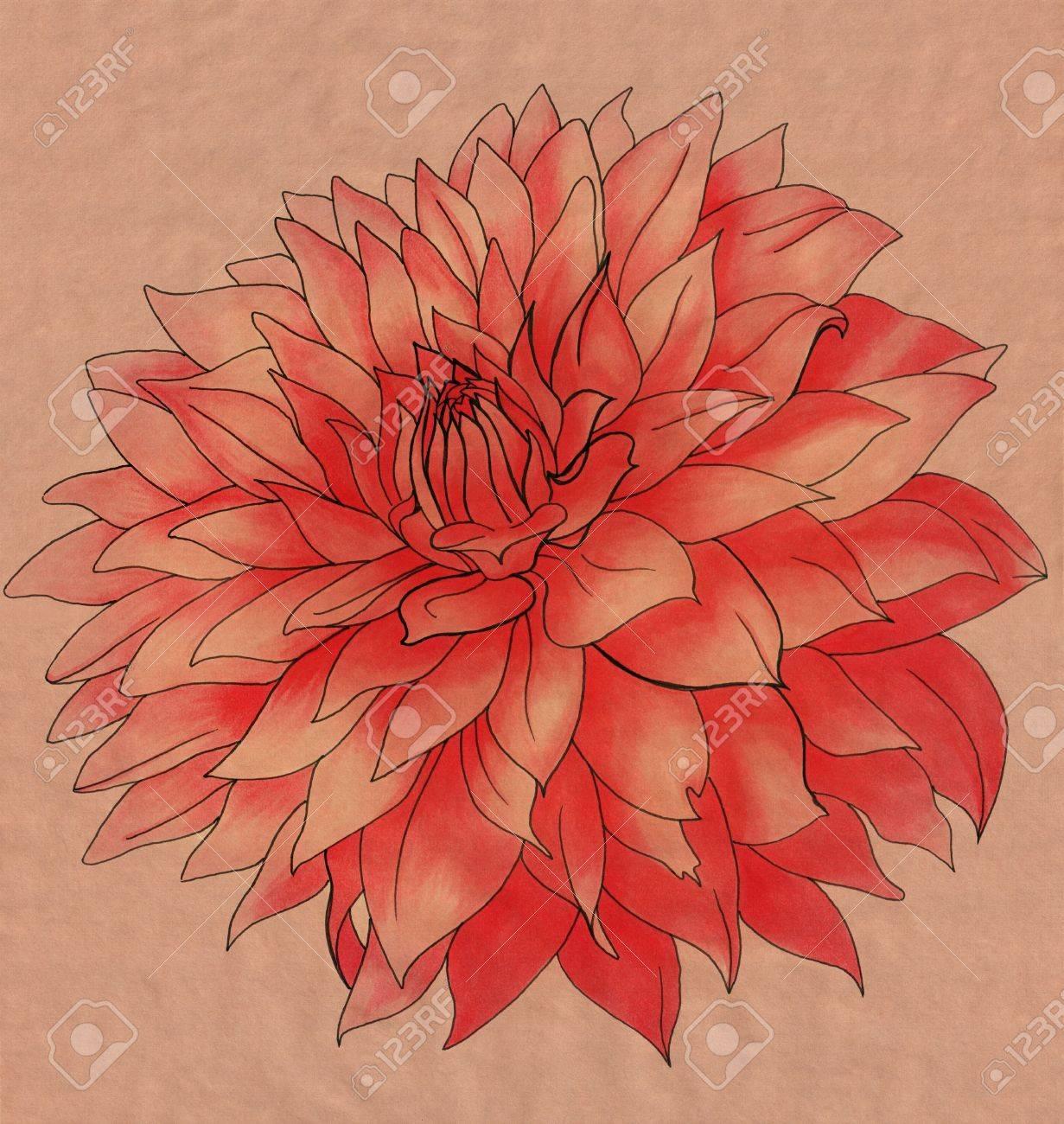 1231x1300 Dahlia Flower Drawing