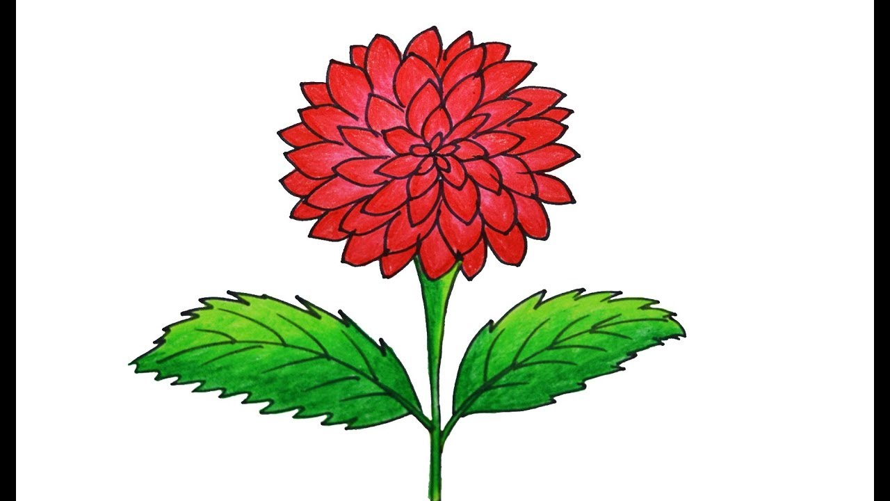 Dahlia Flower Drawing at GetDrawings.com | Free for personal use ...