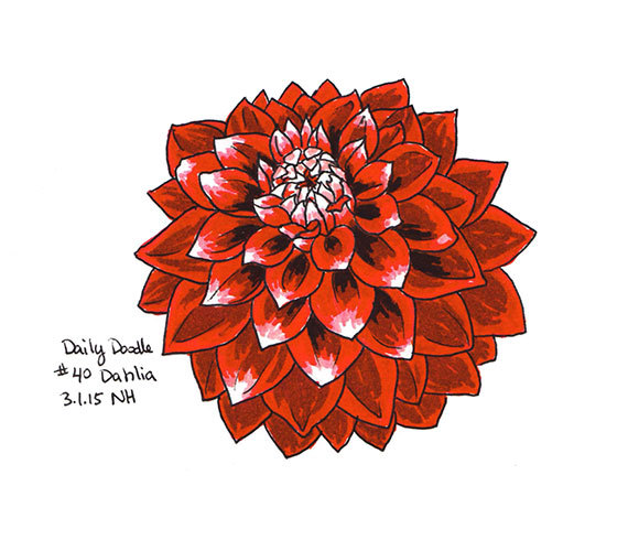 570x490 No.40 Dahlia Original Artwork Flower Drawing Illustration