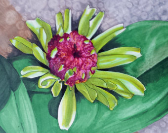 340x270 Original Drawing Of Dahlia Flower Red And Black By Mkdrawings