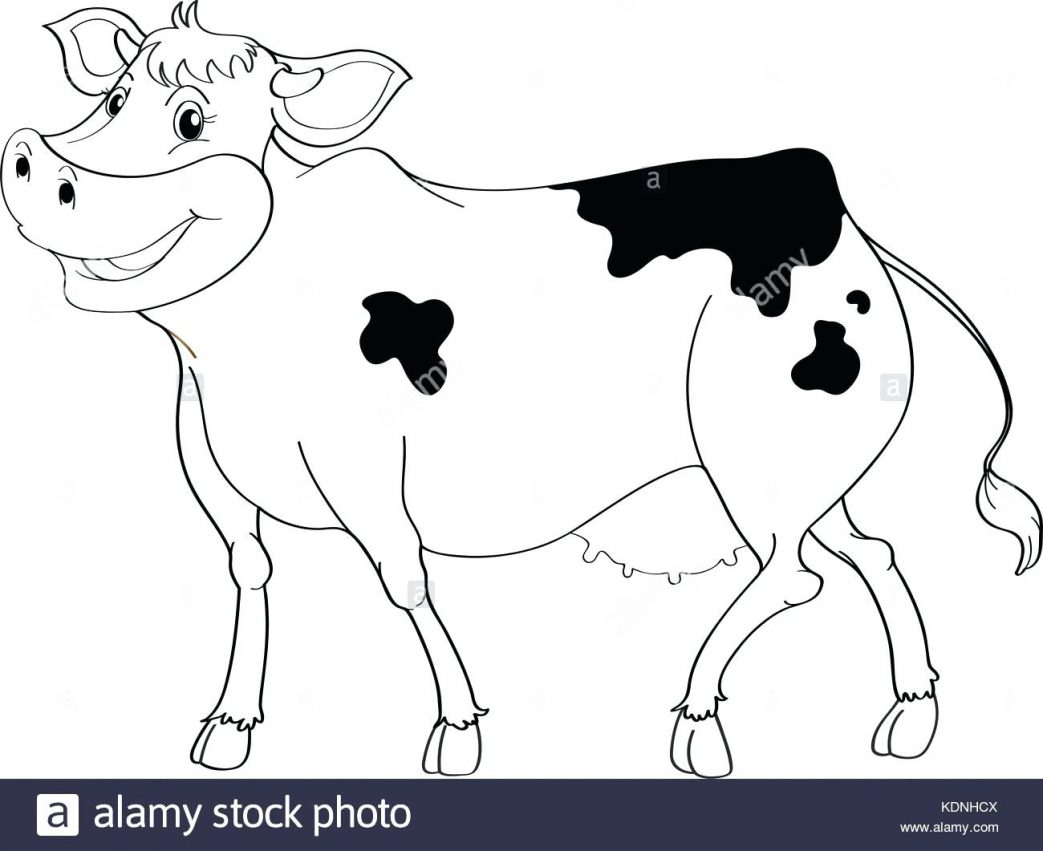 Dairy Cow Drawing at GetDrawings com | Free for personal use