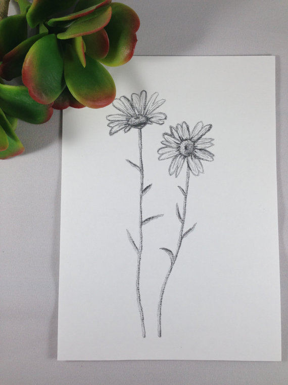 570x760 Daisy Drawing Daisy Print Botanical Art Flower Drawing