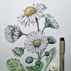 236x236 Daisy Drawing Related Keywords Amp Suggestions