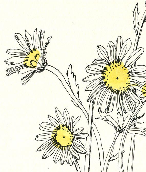 Daisies Flowers Drawing At Getdrawings