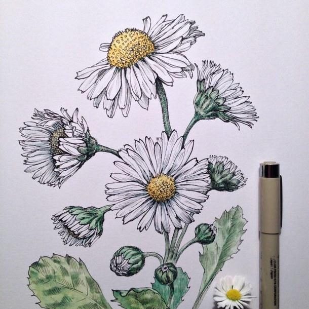 610x610 Art, Cool, Daisy, Drawing, Flower