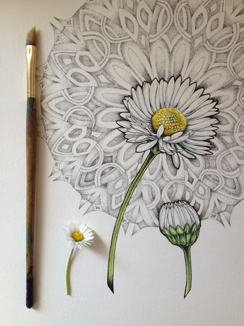 500x667 Shading A Daisy Drawing